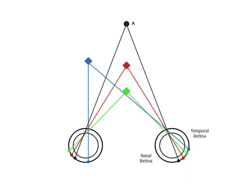 Human binocular vision